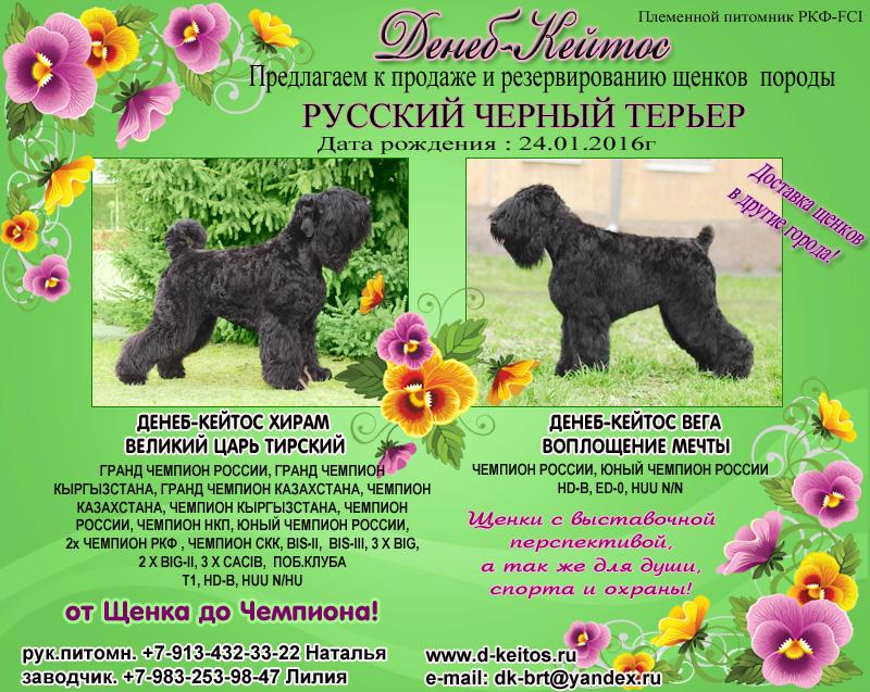 http://d-keitos.ru/kcfinder/images/PUPPY/2016_Hiram_Vega/RUS.jpg