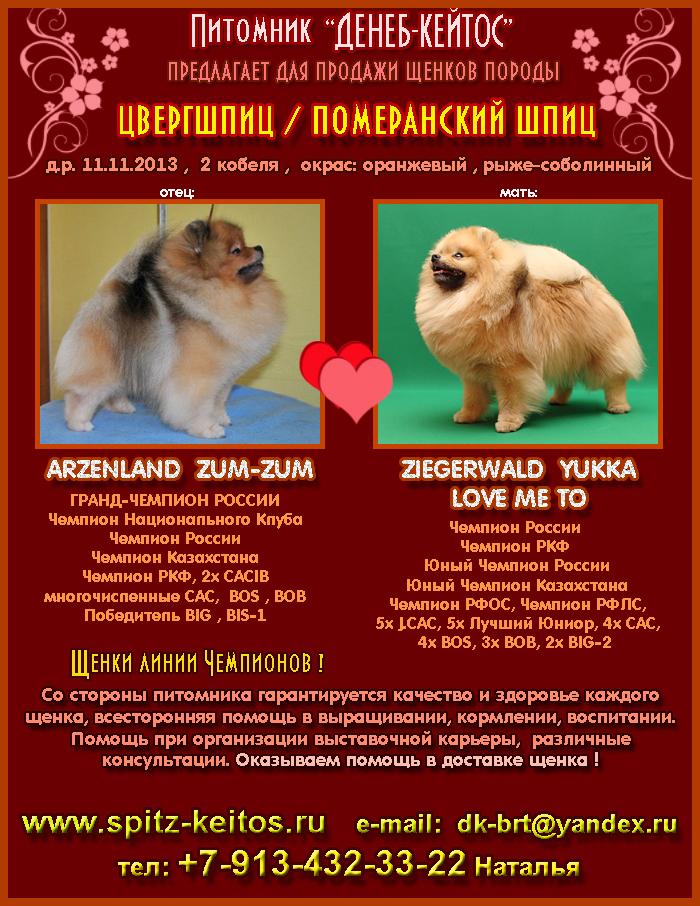 http://www.d-keitos.ru/kcfinder/images/PUPPY/Shpitz.jpg